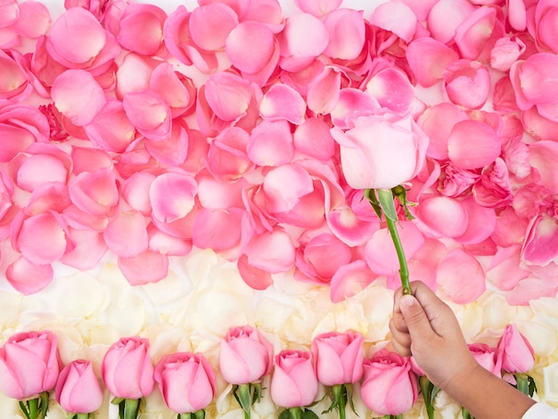 Child hands holding pink rose. Premium Photo