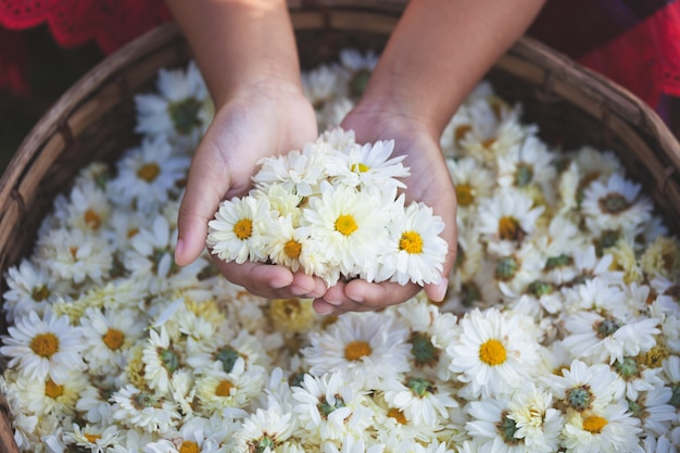 Child holding beautiful flowers in the basket of flower Premium Photo