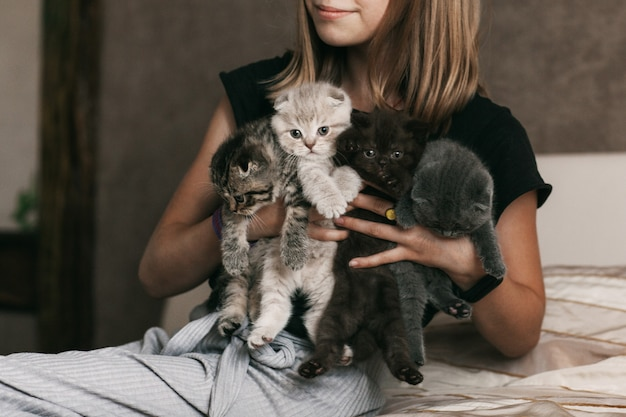 The child holds beautiful british kittens of different colors in the hands of a girl Premium Photo