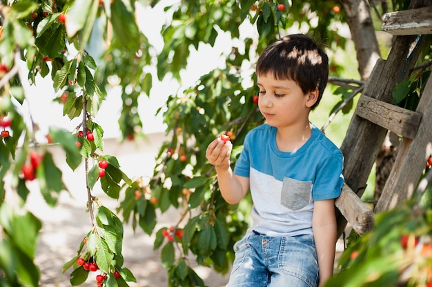 Child pics a cherry from the tree. healthy childhood, vacations in the village Premium Photo