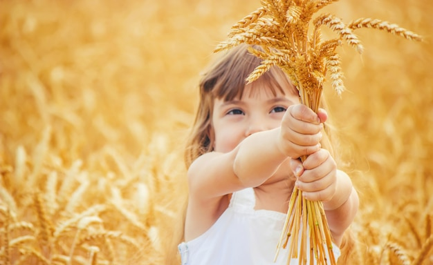 Child in a wheat field. selective focus. Premium Photo