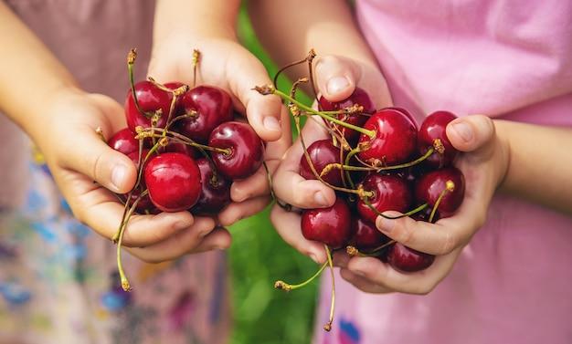 Children eat cherries in the summer Premium Photo