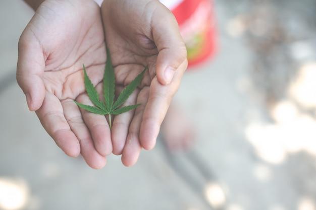 Children holding marijuana leaves. Free Photo