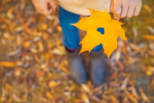 Children in the park with autumn leaves. selective focus. Premium Photo
