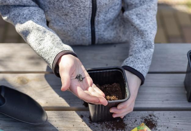 子供の手は、木製のテーブルの上に立って、苗のポットに植物の種を入れます。就学前の子供のための植物成長学習活動の概念。 Premium写真