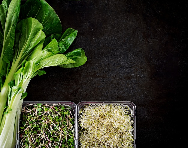 Chinese cabbage and micro greens on black table Free Photo