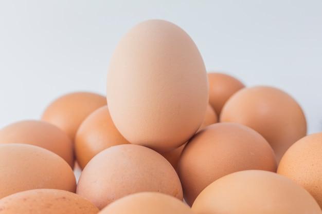 Chiodo di colesterolo luce animale singolo natura Foto Gratuite