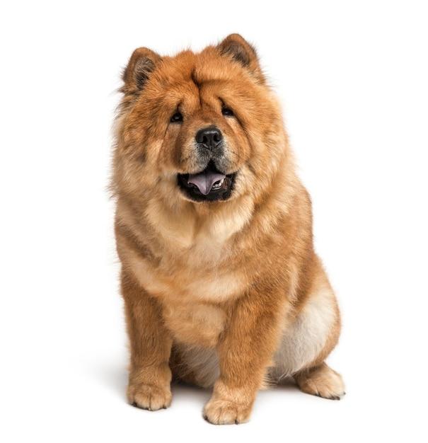 Cães semelhantes