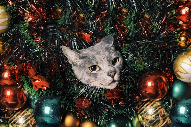 クリスマスキャットグレー Premium写真