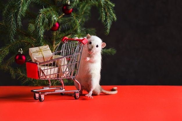 Christmas composition with a real rat. a rat near a christmas tree with toys holds a trolley with gifts after shopping Premium Photo