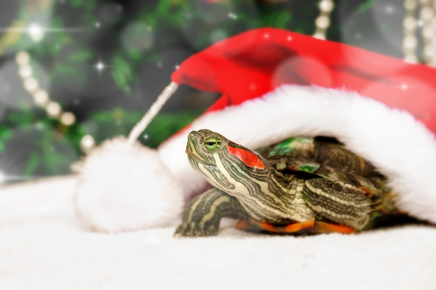 Christmas creative card with turtle in red santa claus hat. Premium Photo