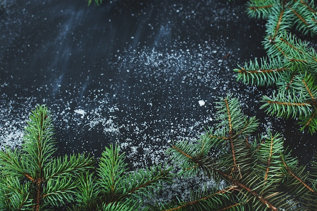 Christmas fir on the dark surface with snow Free Photo