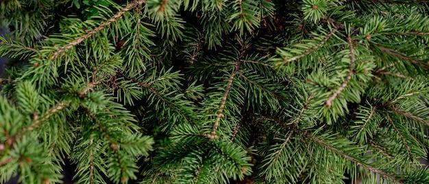 モミの枝のクリスマスの緑の背景。テキスト、テンプレート、空白のバナー。 Premium写真