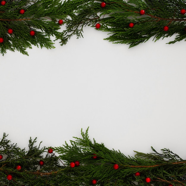 Christmas pine tree leaves on a white background with copy space Free Photo