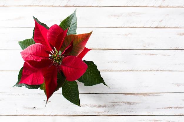 Christmas poinsettia flower on white wooden table top view, copyspace Premium Photo