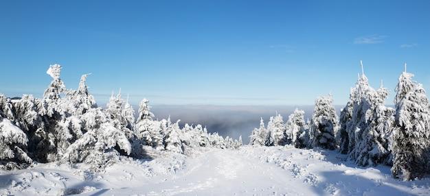 Снежные елки в горах, панорама Premium Фотографии