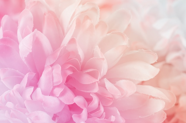 Chrysanthemum flowers in soft pastel color and blur style for background Premium Photo