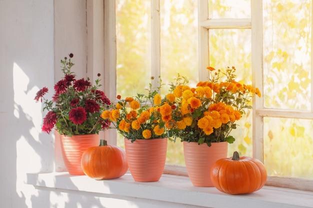 菊と古い白い窓辺にカボチャ Premium写真