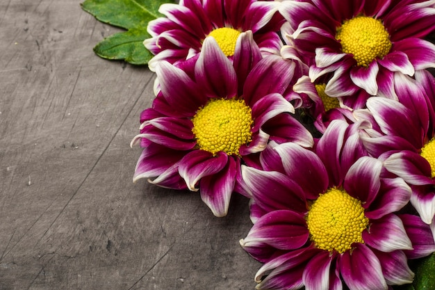 Chrysanthemums on a dark background with copy space Premium Photo