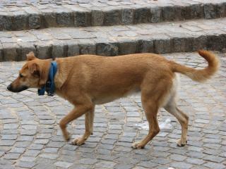 シナモン犬 無料写真