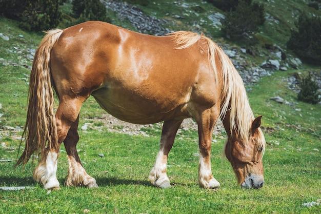 Лошадь с корицей, пасущаяся в горах Premium Фотографии