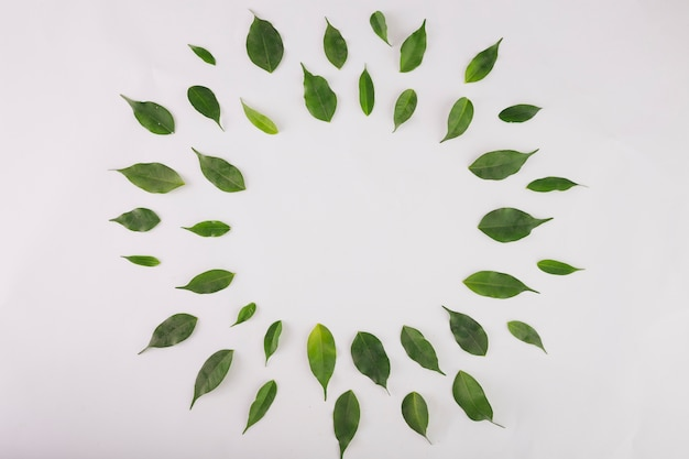 Circle from green leaves Free Photo