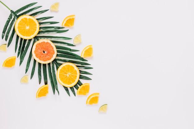 Citruses on palm leaf Free Photo