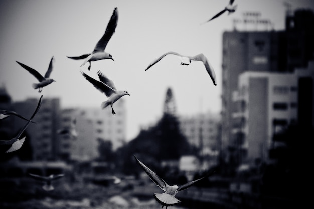 Cityscape with seagulls. black and white photo with film grain effect Free Photo