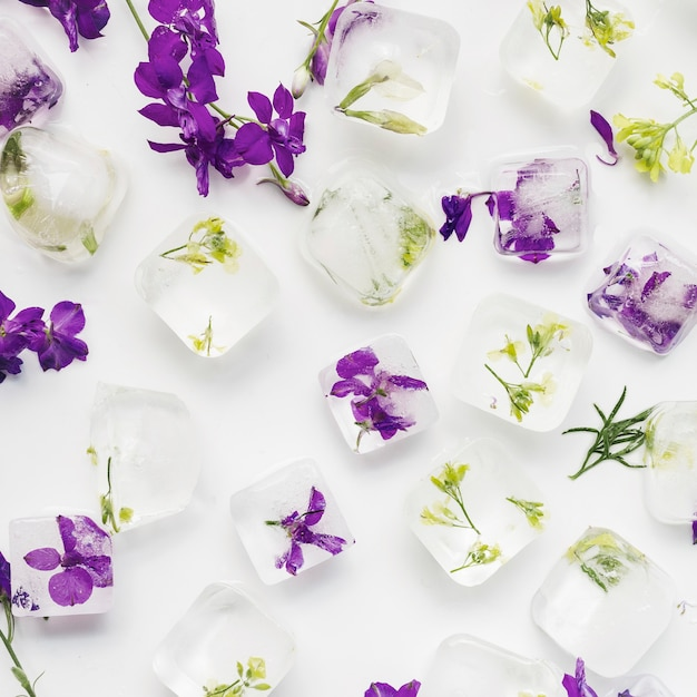 Clear ice cubes with plants and flowers Free Photo