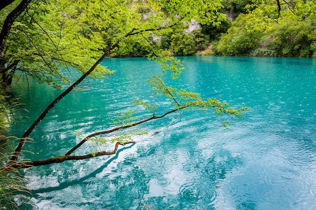 Clear water of plitvice lakes, croatia Premium Photo