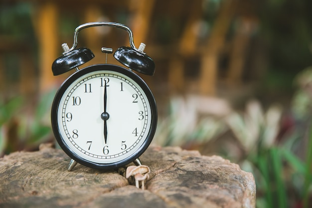 Clock on wood tree nature background time at 6 o'clock morning Premium Photo