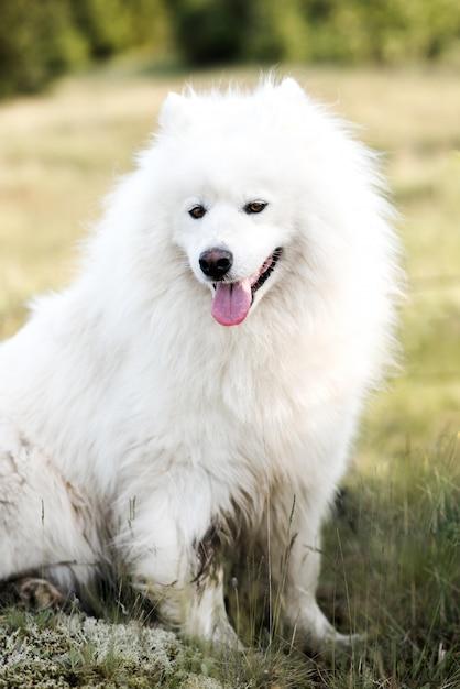 Закрыть милая белая собака в лесу Premium Фотографии