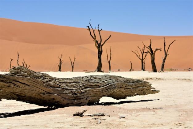 Закройте выстрел из сломанного верблюжьего колючего дерева в пустыне с песчаных дюн и ясного неба Бесплатные Фотографии