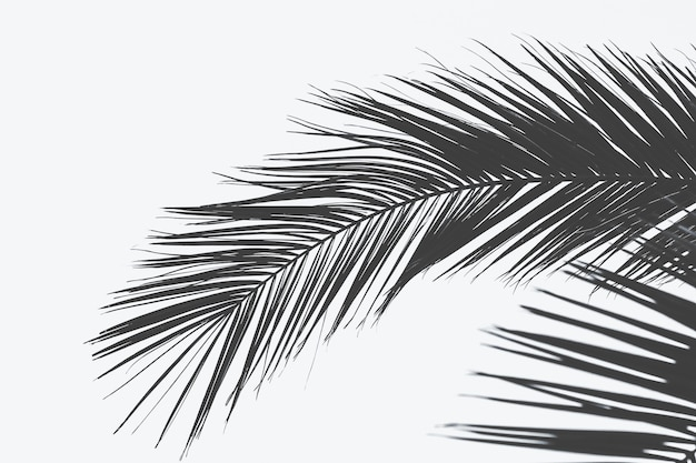 Close shot of palm tree leaf with a white surface Free Photo