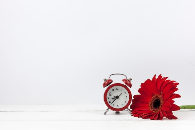 Close-up of a alarm clock and red gerbera flower Free Photo