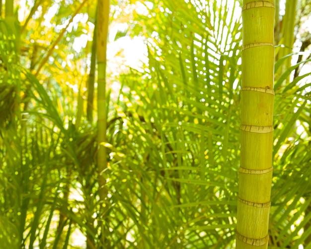 Close-up of areca palm stem Free Photo