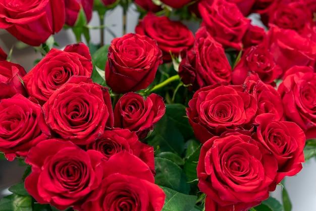 Ассортимент красивых красных роз Premium Фотографии