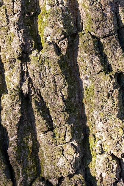 Close-up of the bark of a tree growing in the forest. small depth of field Premium Photo
