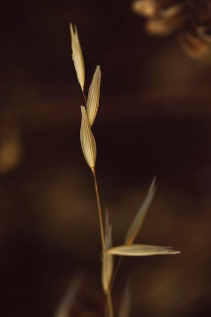 Крупный план красивая специя сухой травы Бесплатные Фотографии