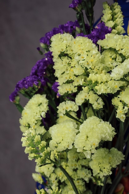 Close-up of beautiful yellow and purple limonium flowers against gray wall Free Photo