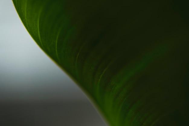 Close-up bent leaf Free Photo