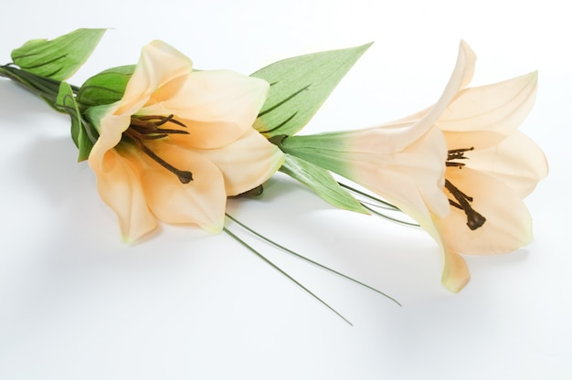 Close-up of blooming lilies Free Photo