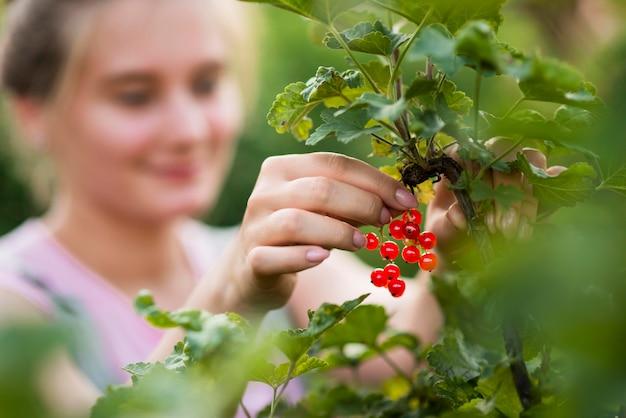 Close-up blurred girl picking fruits Free Photo