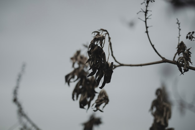 Close-up branch with dried fall leaves Free Photo