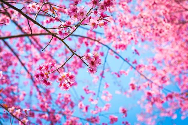 Close-up of branches with pink flowers Free Photo