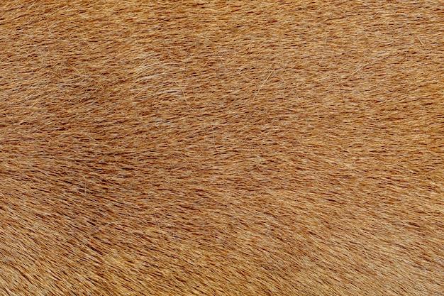 Close up brown dog skin Premium Photo
