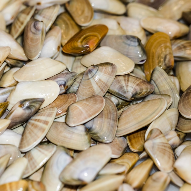 Close-up of bunch of fresh clams Free Photo