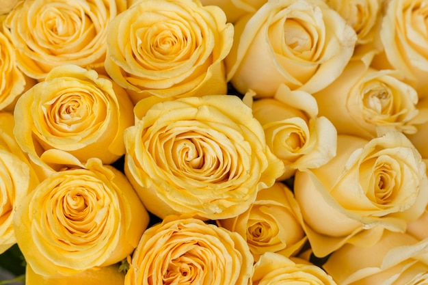 Close-up bunch of yellow roses Free Photo