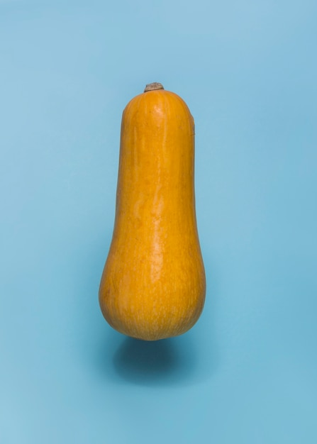 Close-up of a butternaut squash on blue backdrop Free Photo