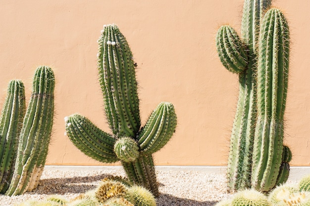 Close-up of cacti field Free Photo